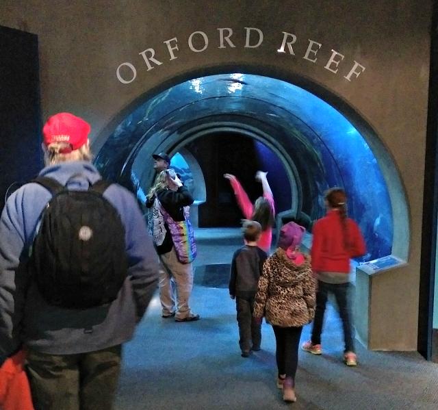 Melissa Kaylene's review of the Oregon Coast Aquarium