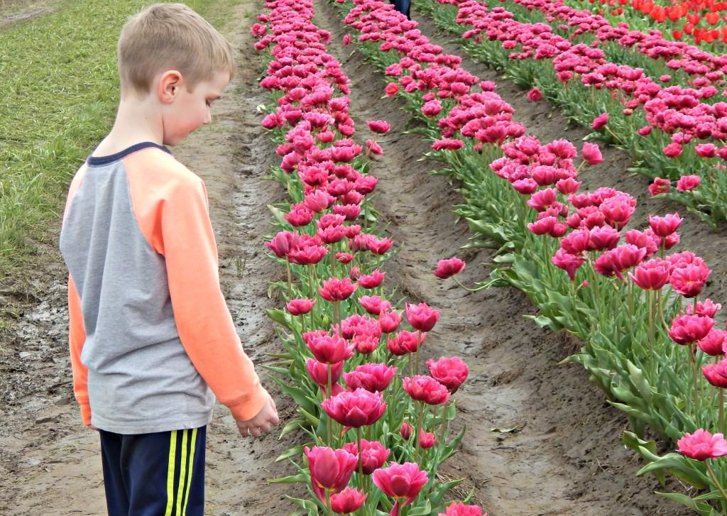 woodburn-tulip-festival-29